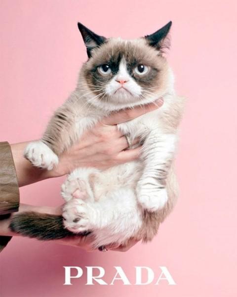 20915-gato-prada-grumpy-cat