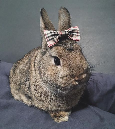 Burberry, bebê! Vem ver como o coelho já foi e é um símbolo fashion na galeria
